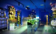 水族箱造景Natur Gallery  -----名叫自然界画廊的水族店