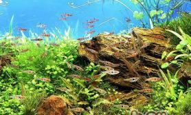 水族箱的底砂和水中的温度要求