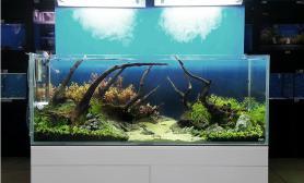 水草缸造景沉木水草泥化妆砂青龙石90CM尺寸设计89