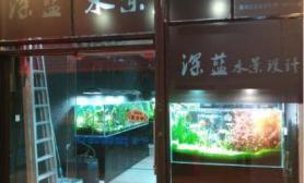 鱼缸造景水草造景培训
