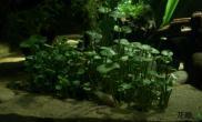 水草造景夜晚中那一抹绿色 纯DIY打造