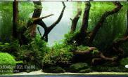 水草缸造景沉木水草泥化妆砂青龙石90CM尺寸设计118
