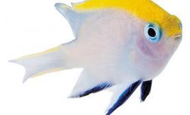 热带鱼饲养的要点