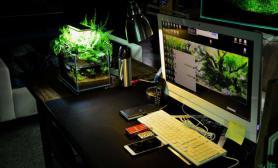水草造景办公室难道不应该是这样的吗?