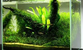 水草缸造景沉木水草泥化妆砂青龙石45CM及以下尺寸设计19