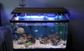 简单配置的海水小缸