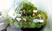 摆在桌面上水草缸挂在墙壁上水草缸微景观居然还可以这样