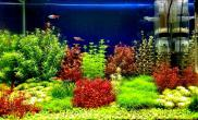 过年了水草缸我的水草也出现了最好的状态水草缸请大家欣赏沉木杜鹃根青龙石水草泥