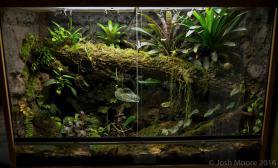 雨林生态缸欣赏照片中型