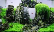 微缸水草原创造景鉴赏作品通幽