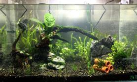 鱼缸造景调整后水草缸沉木下水