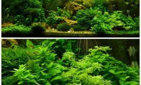 水族箱造景绿色的梦境