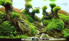 水草缸造景沉木水草泥化妆砂青龙石120CM造景设计