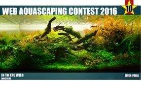 参赛作品Web Aquascaping Contest 2016