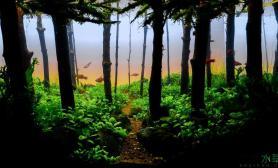 在森林里游泳的鱼水草缸这画面太美了