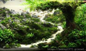 水草缸造景沉木水草泥化妆砂青龙石120CM尺寸设计89