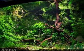 水草造景学习鱼缸造景