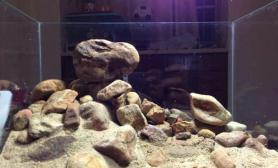 野采石头造景…给下意见