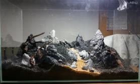 青龙石景基本骨架完成水草缸希望不要太硬水