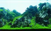 2015年ADA水草造景大赛作品