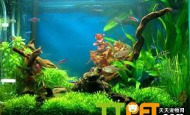 水草正常生长需要哪些条件