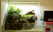 水草造景小缸一枚桌上摆