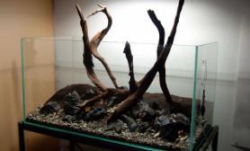 水草缸造景沉木水草泥化妆砂青龙石90CM尺寸设计15