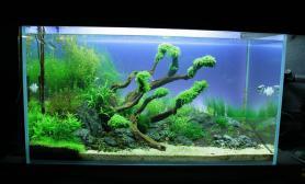 水草缸造景沉木水草泥化妆砂青龙石90CM尺寸设计59