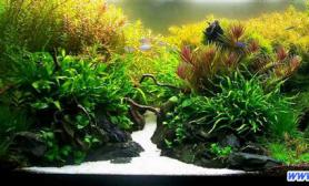 最完美水族造景之环境搭建要素(七)(图)