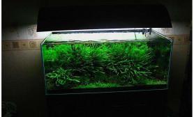 水族箱造景真正的水草缸