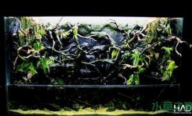 水族箱造景超大水陆缸的制作全过程