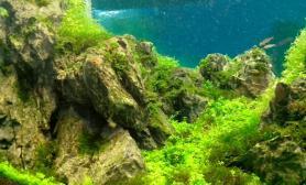 石家庄绿洲水景 最新