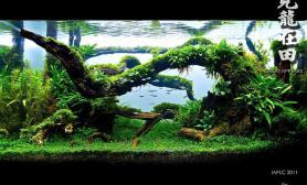 沉木青龙石水草造景90CM尺寸设计30
