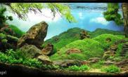 水族箱造景水草造景---密林追踪