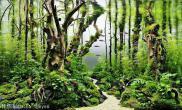 树枝枝条造景鱼缸