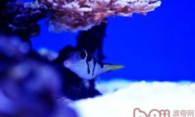 海水缸生物的饲养要求