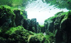 CAA.2015世界水草造景比赛NO:28《在那遥远的地方》