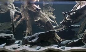 沉木青龙石原生态鱼缸12