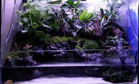 鱼缸造景我也发张我的瞎做的水陆缸