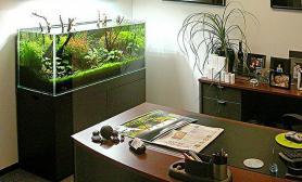 沉木青龙石造景缸与办公空间-01