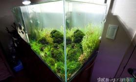 简单的火山石莫丝缸水草缸看看漂亮吗?