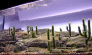 水草缸造景沉木水草泥化妆砂青龙石150CM及以上尺寸设计34