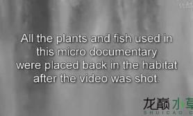 最省钱的水草造景水草缸全部就地取材鱼缸水族箱