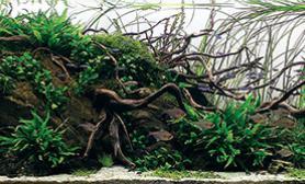 2015年世界水草造景大赛获奖作品高清图鉴11~20名