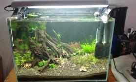 50小缸水草缸速生水草水草缸树形流木建缸两周小记