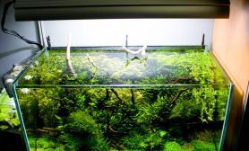 沉木青龙石水草造景90CM尺寸设计39