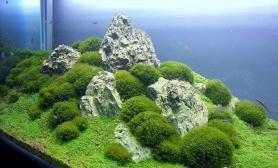 大师作品--巧用绿藻球造景