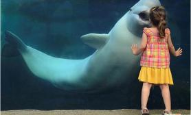 美国小女孩水族馆获白鲸亲吻(多图)