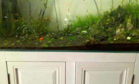 什么时候能爬满水草缸前段时间又补了点水草缸但是我看着都让虾抛起来了鱼缸水族箱