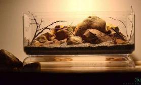 这些骨架图我是跪着看完的鱼缸水族箱